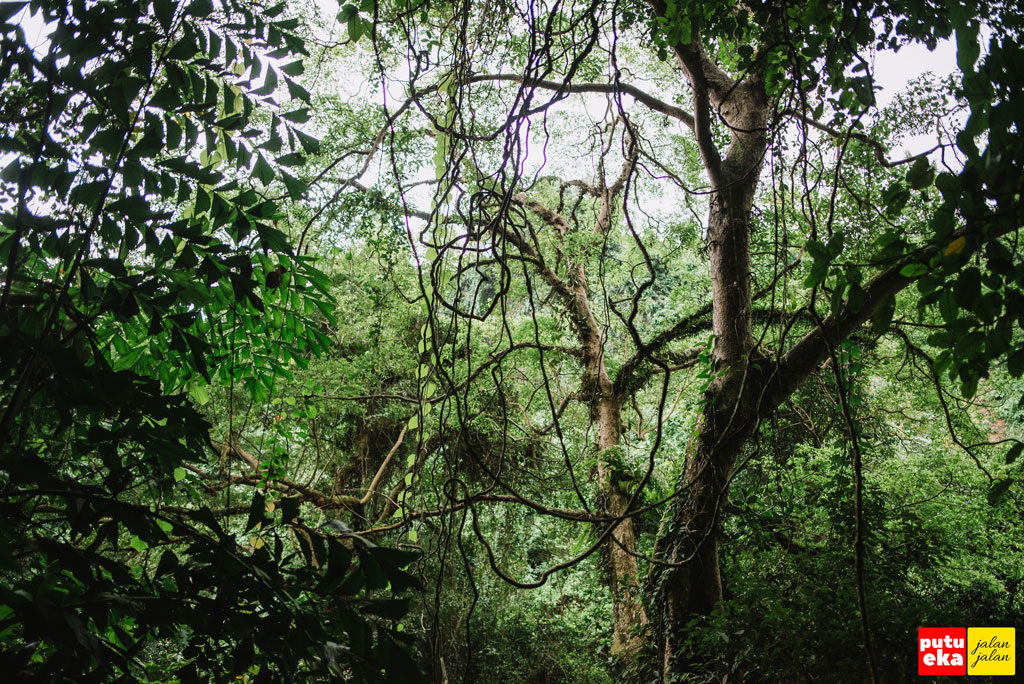 Pepohonan hijau yang menaungi air terjun