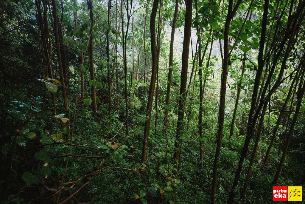 Pepohonan hijau yang masih melingkupi kawasaan air terjun