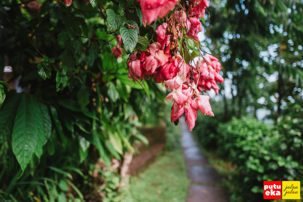 Bunga merah segar terkena air hujan yang kami temui ketika menuju parkiran