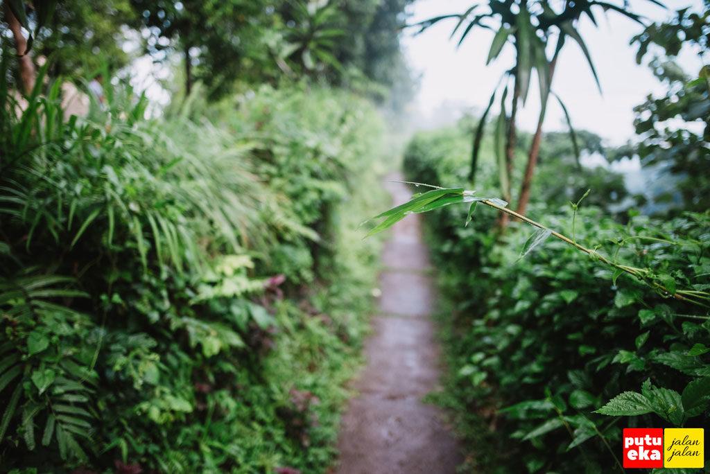 Jalan setapak yang kami lalui dilingkupi dengan tumbuhan hijau