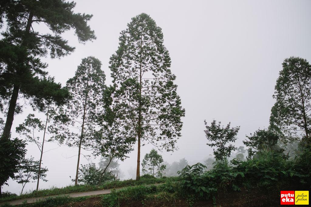 Kabut menyambut Putu Eka Jalan Jalan ketika sampai di Padang Kasna