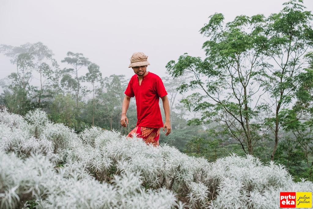 Padang Bunga Kasna Si Cantik Edelweis Dari Bali Putu Eka Jalan
