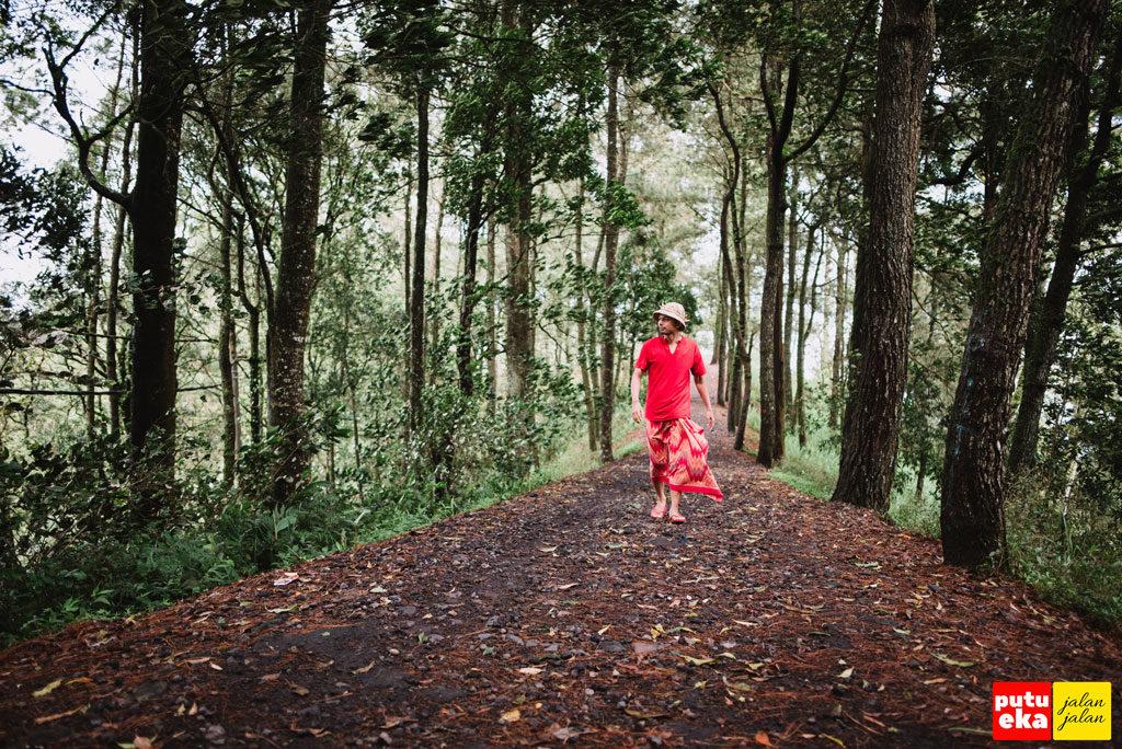 Putu Eka Jalan Jalan sedang menyusuri jalan yang membelah hutan Pinus sambil menghirup bau dari pohon Pinus