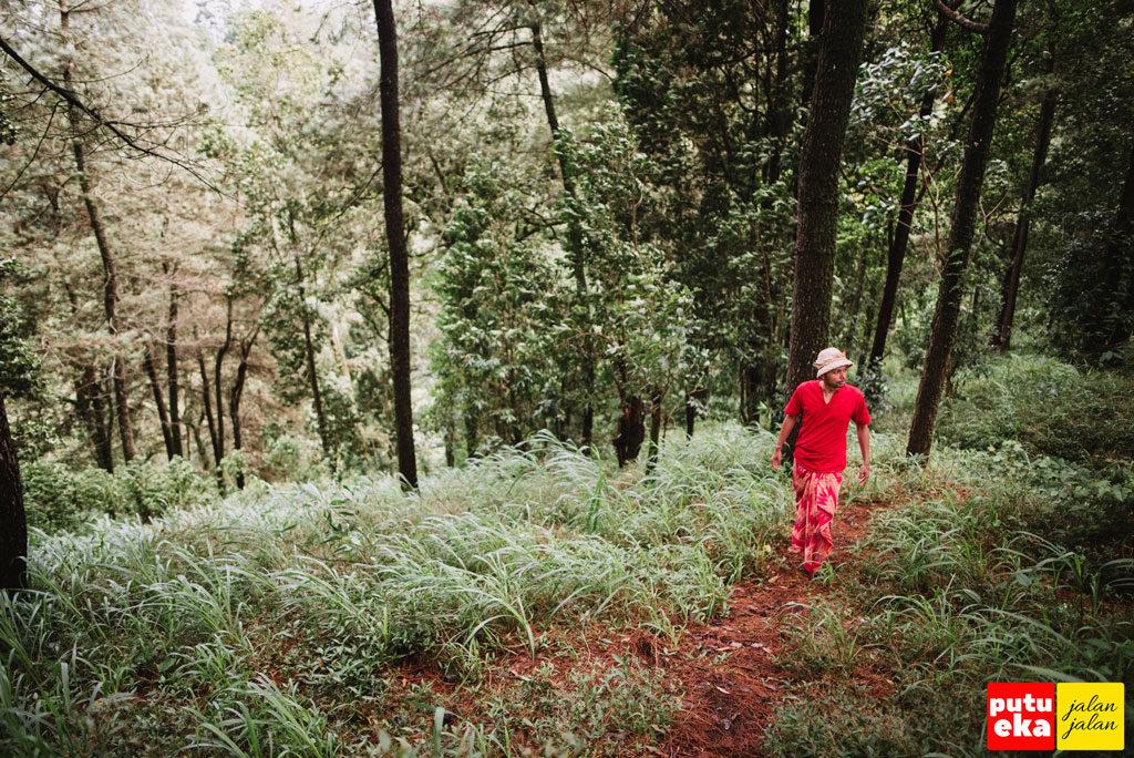 Hiruplah bau dari pohon Pinus yang menenangkan