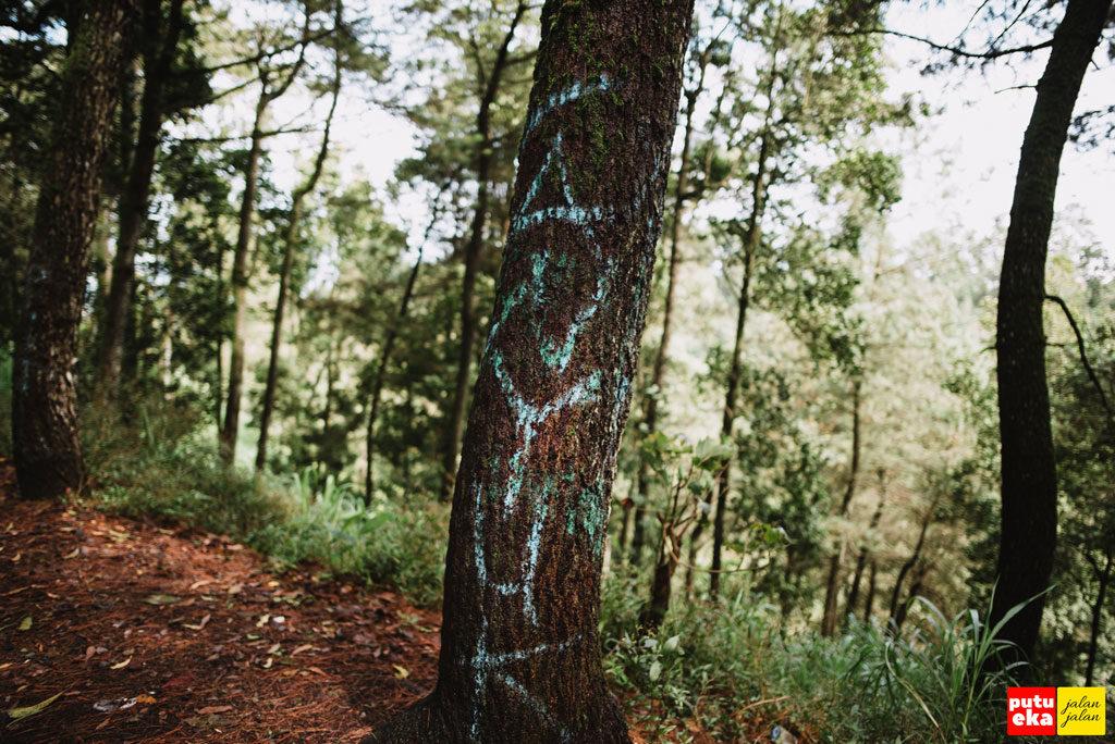 Coretan dari orang yang tidak bertanggungjawab di batang pohon Pinus