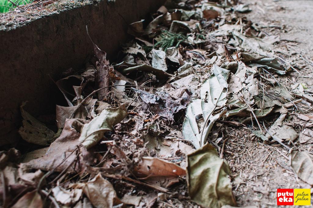 Tumpukan daun kering di tepian jalan