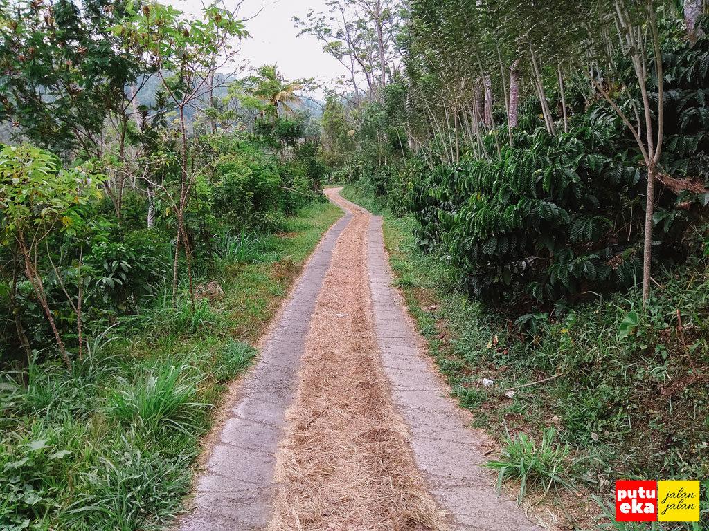 Jalan menuju Blemantung dengan track semen kiri kanan