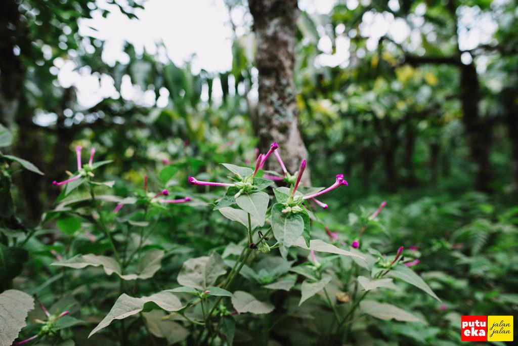 Tanaman liar dengan bunganya berwarna cerah