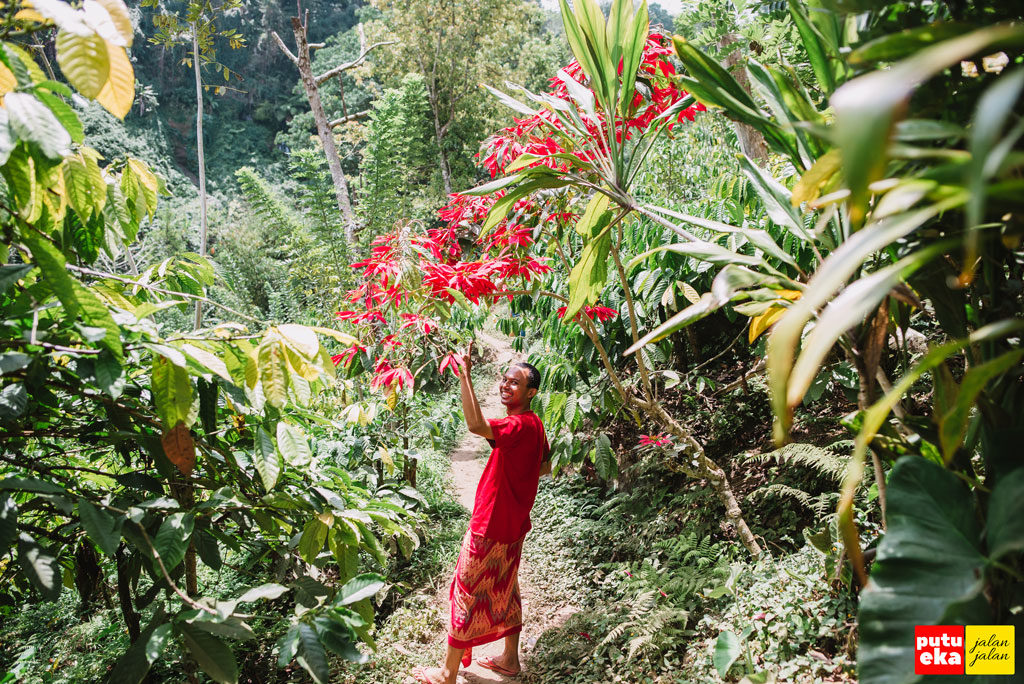 Putu Eka Jalan Jalan dibawah tanaman berwarna merah