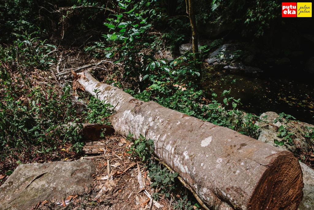 Pohon tumbang setelah digergaji dalam rangka pemugaran pura
