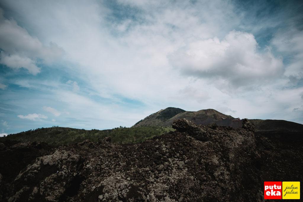 Beberapa bagian Taman Lava yang menghijau ditanami pohon Pinus