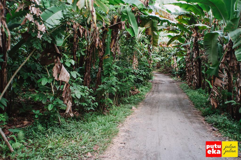 Jalan tanah dengan pohon pisang mengapit di kedua sisi
