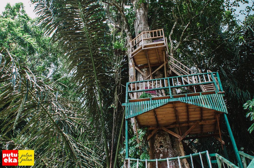 Rumah pohon dengan ketinggian yang cukup tinggi di mata air