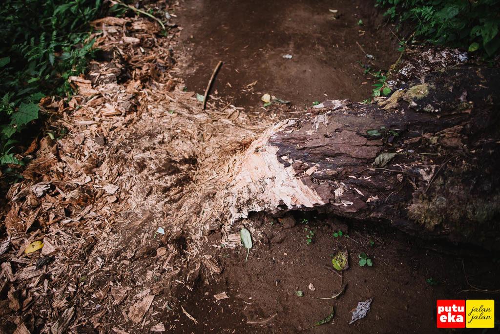 Pohon tumbang melintang ditengah jalan yang mulai dipotong kecil-kecil