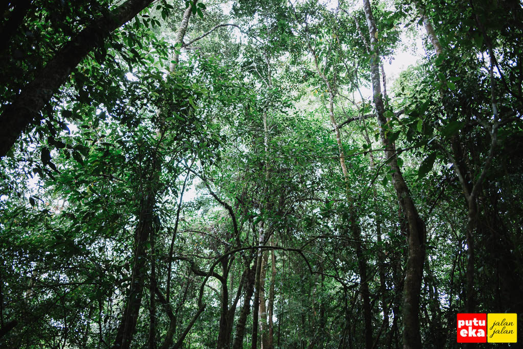 Kanopi hijau dari dedaunan yang melingkupi jalan