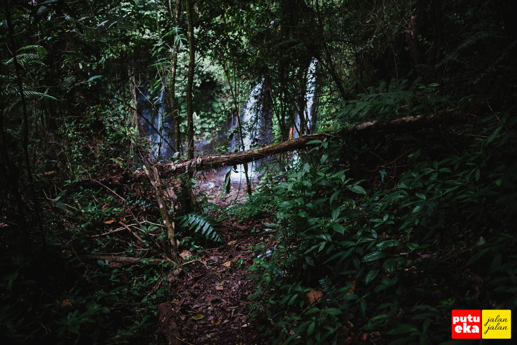 Air Terjun Two atau Twin mengintip dari balik pepohonan