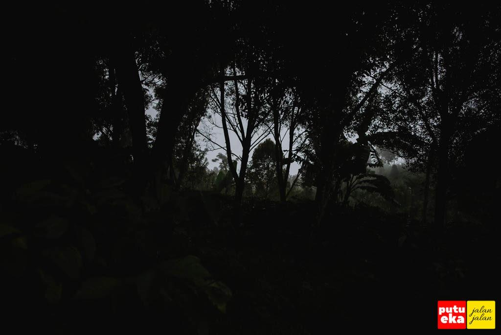 Kabut tampak bercengkrama dengan pohon cengkeh dikegelapan