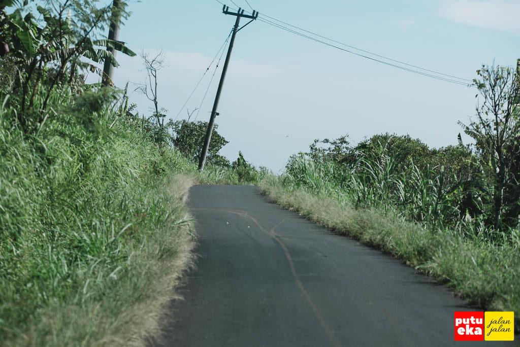 Rumput tampak tinggi di pinggir jalan raya