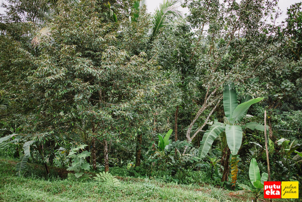 Pepohonan didekat tempat parkir air terjun