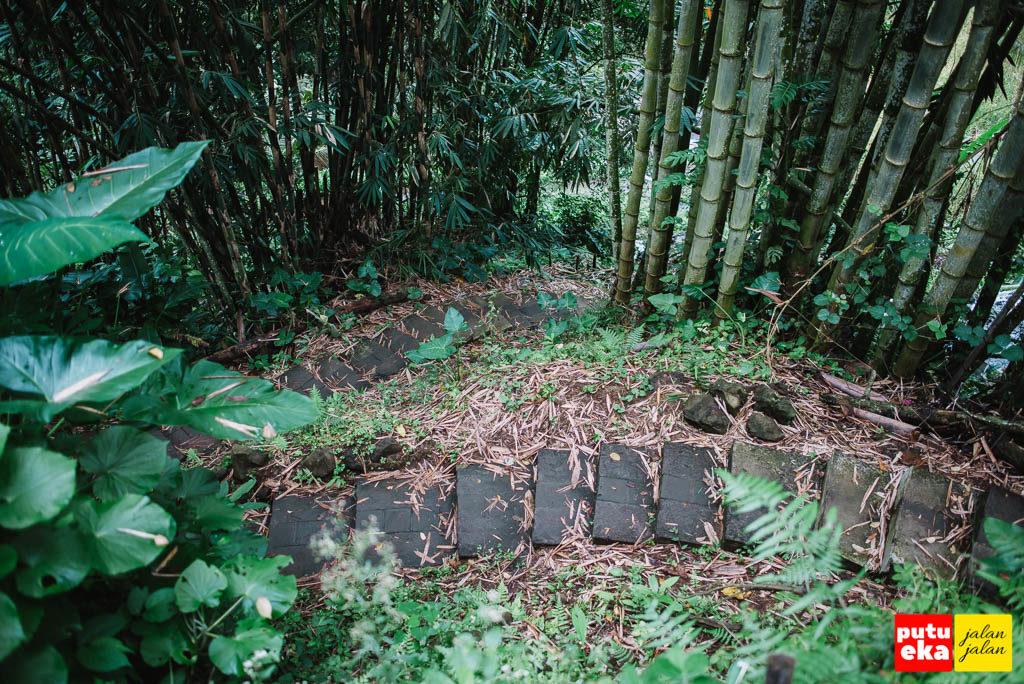Undakan yang melingkar melewati pepohonan bambu