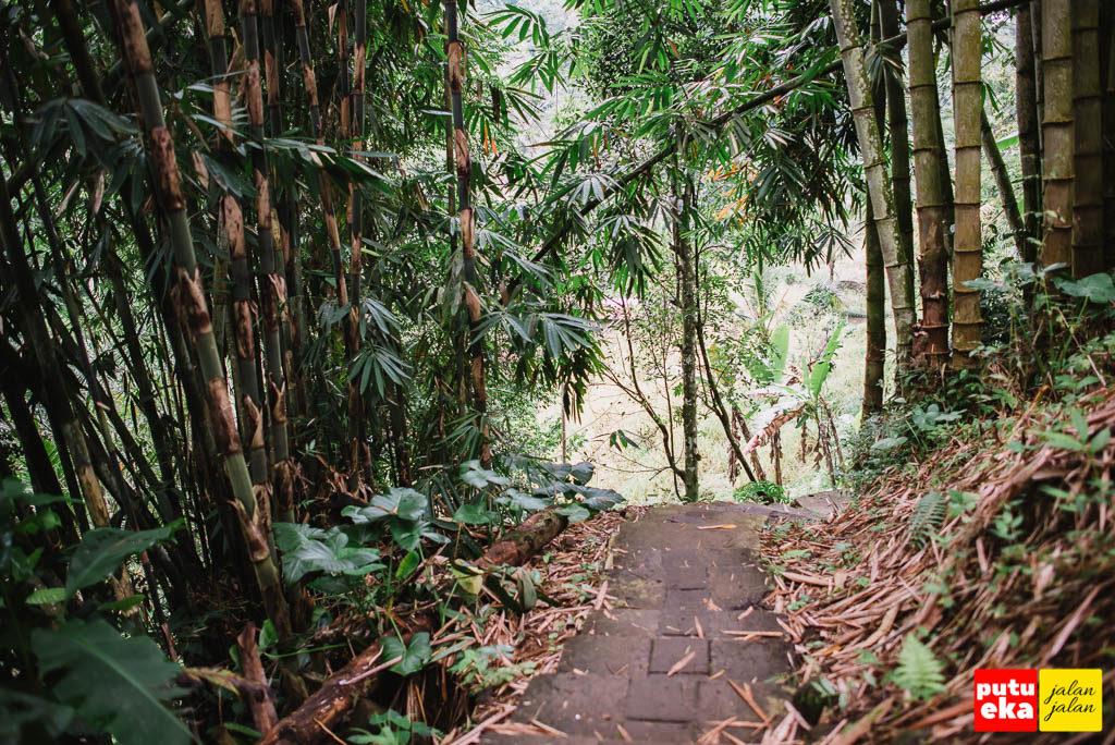 Jalan menuju air terjun yang membelah pepohonan bambu