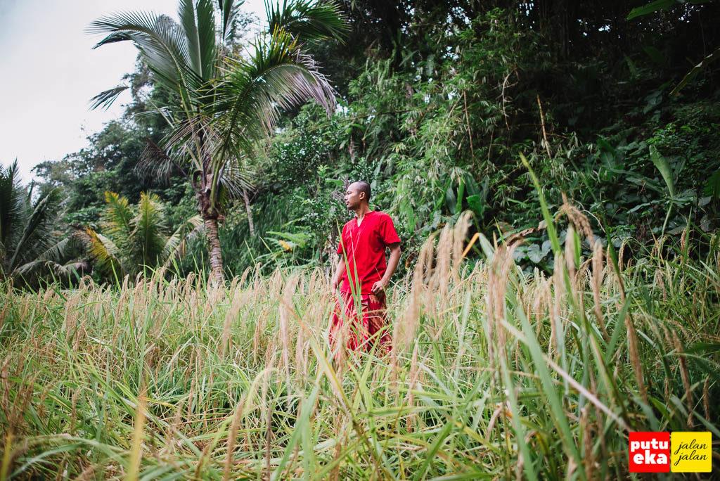 Putu Eka Jalan Jalan berada diantara padi yang menguning