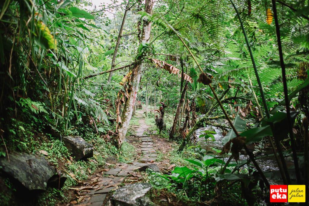 Jalan setapak menuju air terjun dengan pepohonan dikanan kiri jalan