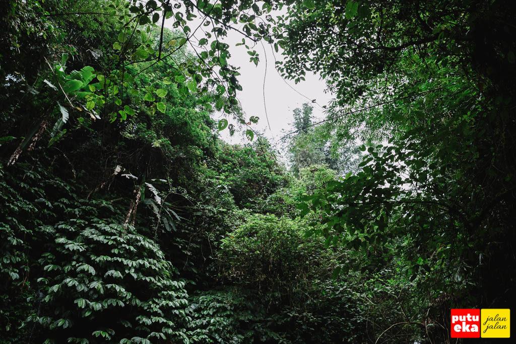 Pepohonan hijau yang melingkupi air terjun