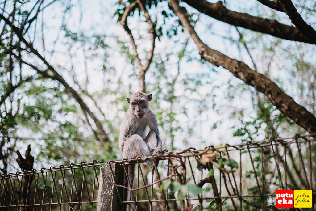 Seekor monyet sedang duduk diatas pagar dari besi