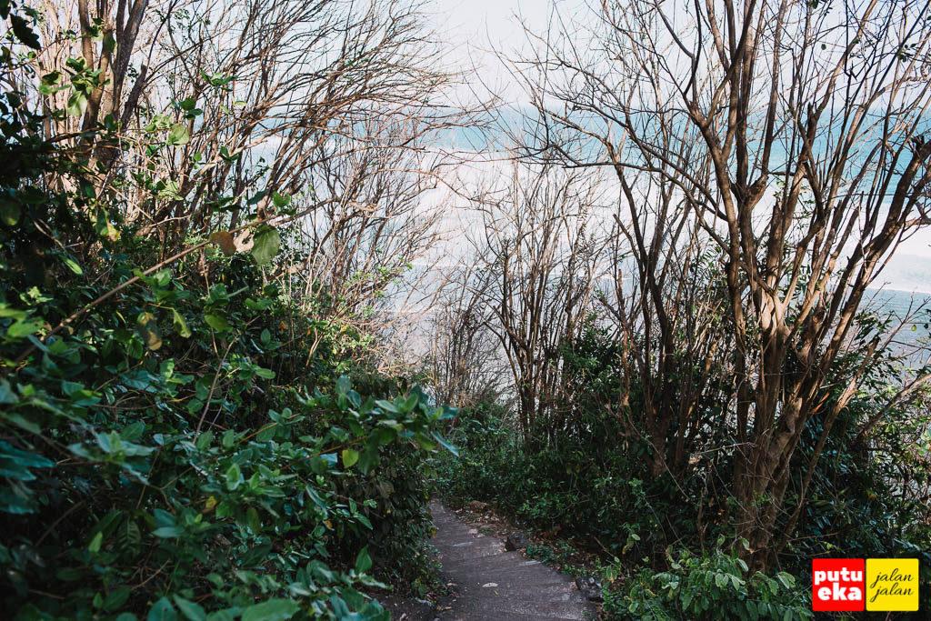 Ranting pepohonan yang menjulur keatas seperti memayungi para pengunjung