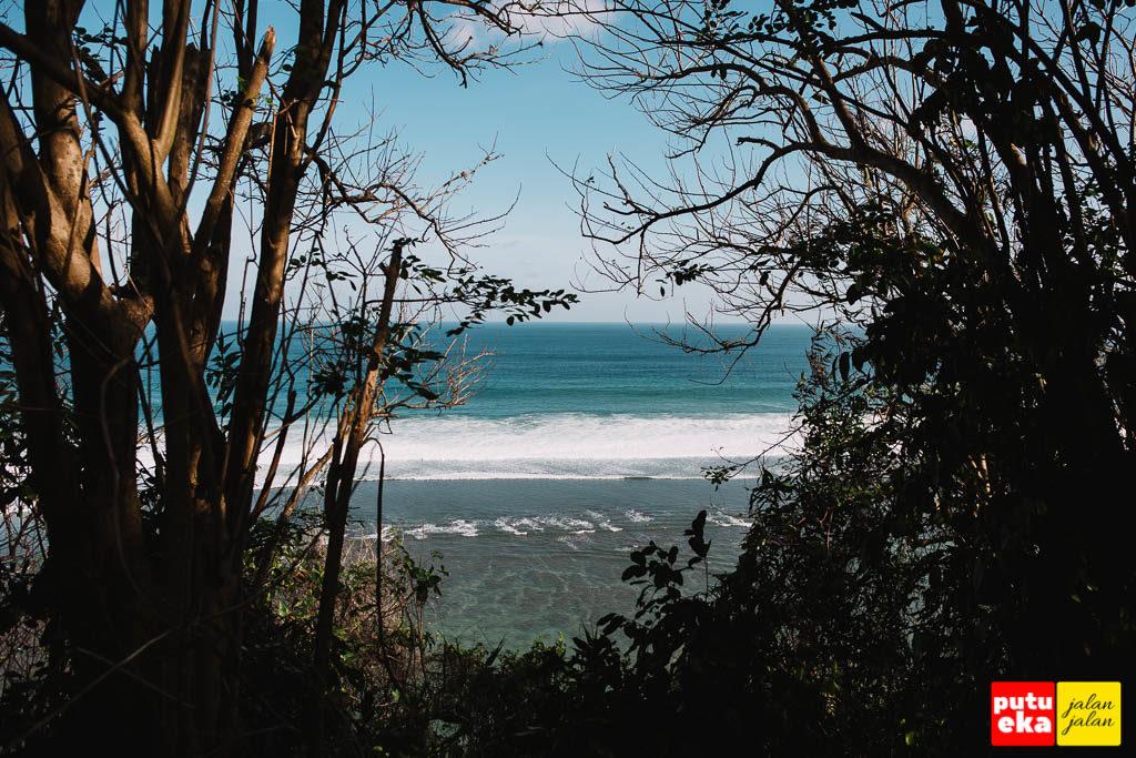 Laut biru terlihat dari sela sela pepohonan