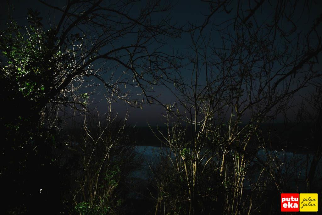 Lampu penerangan menerangi ranting-ranting