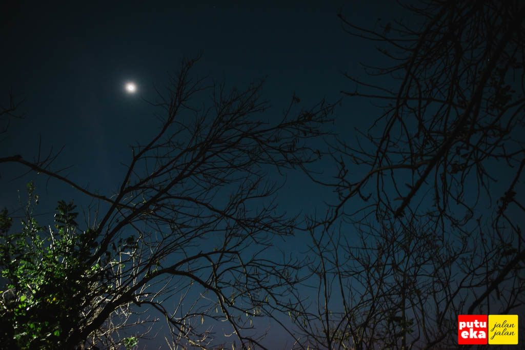 Bulan muncul diantara ranting-ranting pohon