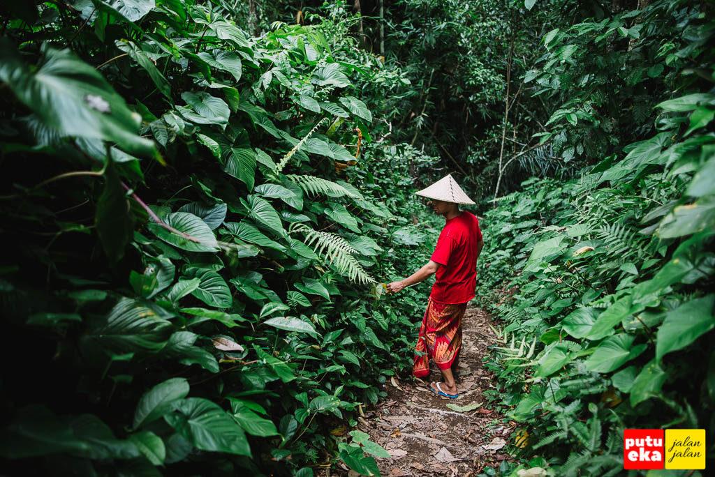 Jalan menuju Air Terjun Kuning pada tahun 2017 yang melewati kebun masyarakat