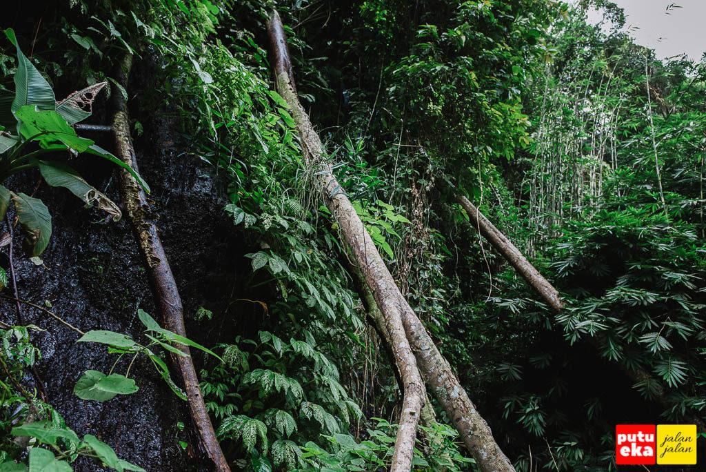 Pepohonan yang tumbang dijalan menuju kea rah air terjun