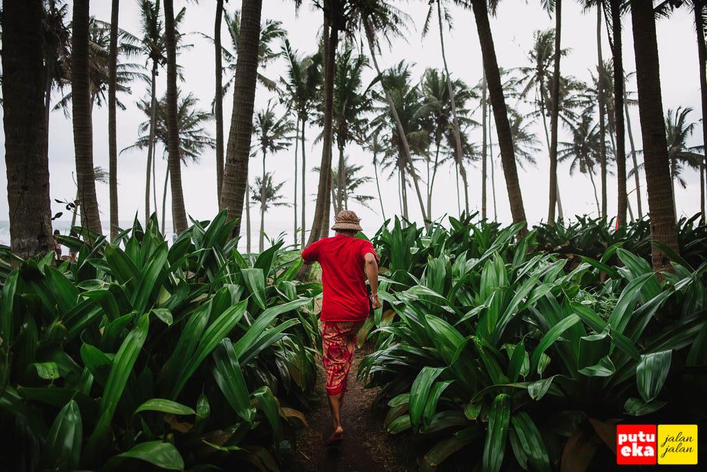 Berlari menembus tanaman Pandan di Pantai Pasut