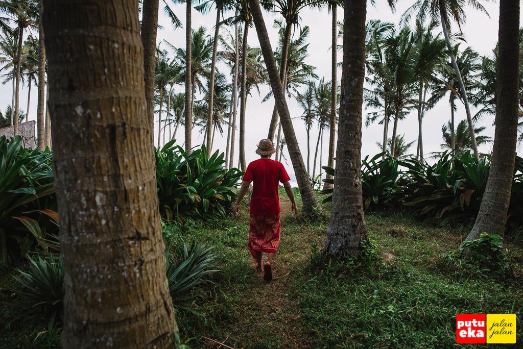 Berjalan menyusuri pepohonan Kelapa