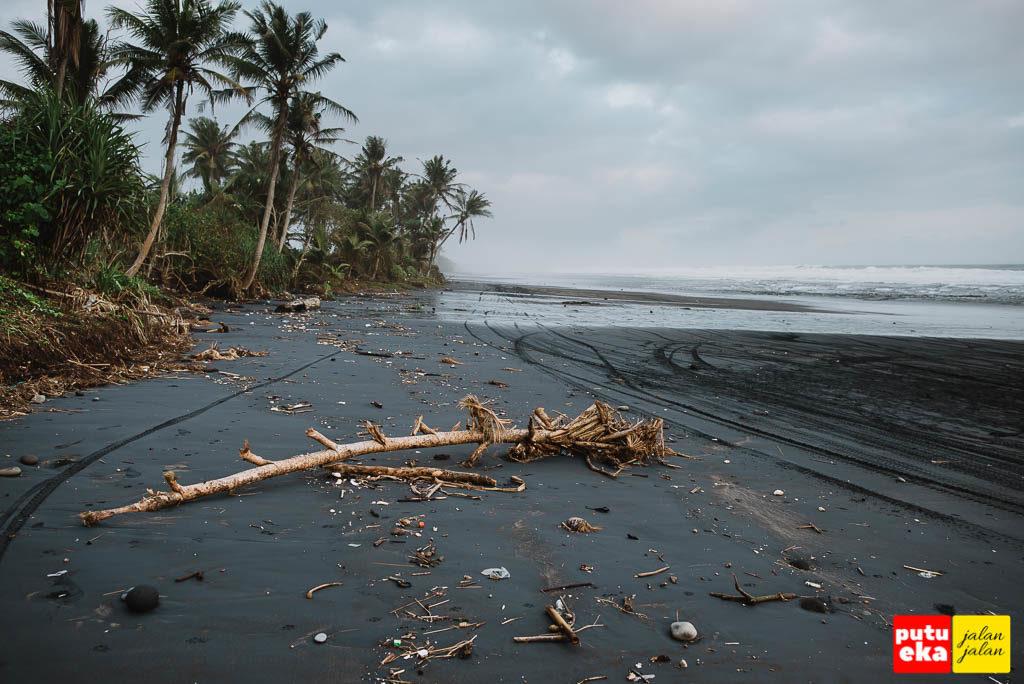 Pantai berpasir hitam dengan onggokan kayu mati