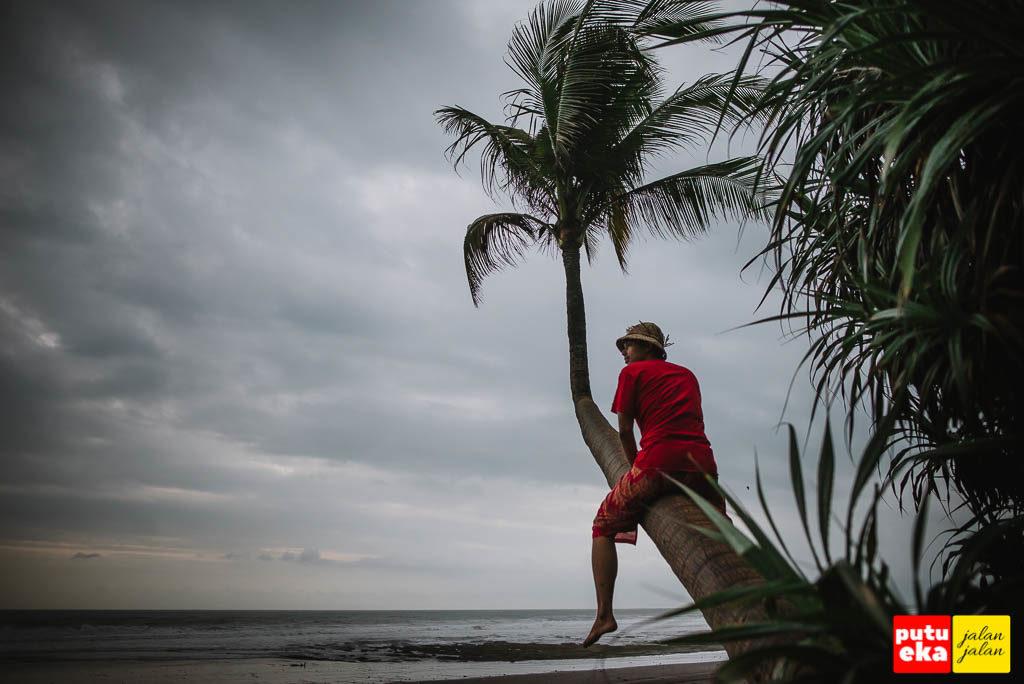 Hanya bisa memanjat setengahnya saja dikarenakan batang pohon kelapanya licin