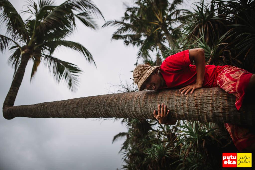Putu Eka Jalan Jalan bersusah payah memanjat pohon Kelapa