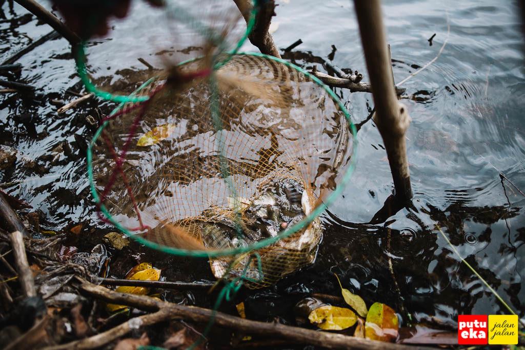 Tangkapan pemancing yang diletakkan didalam air agar ikan tetap hidup