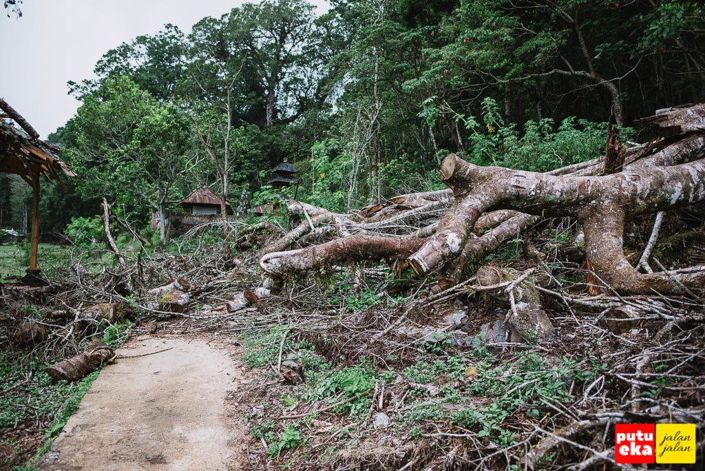 Pohon tumbang yang tidak dibersihkan disebelah gazebo