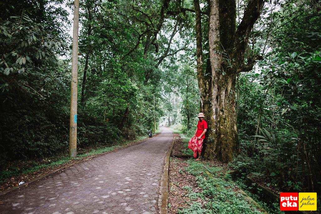 Putu Eka Jalan Jalan bersandar di pohon besar menuju kearah danau