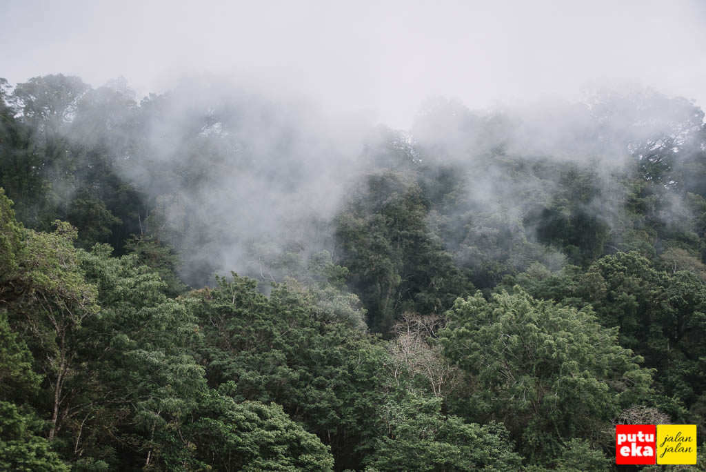 Kabut mulai turun memeluk pepohonan hijau
