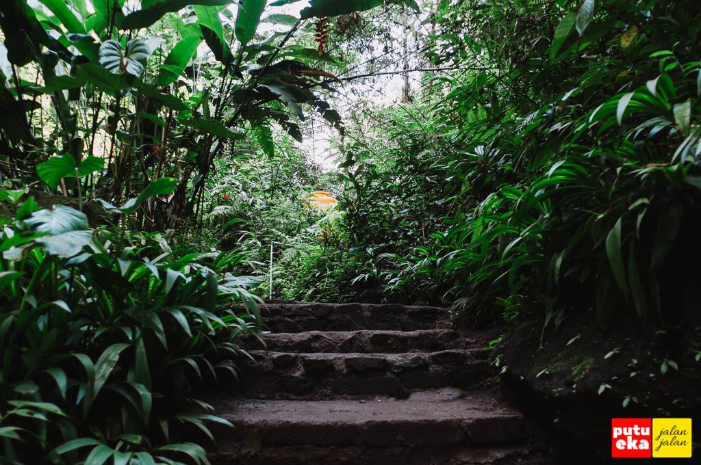 Undagan dengan tanaman hijau sebelum air terjun