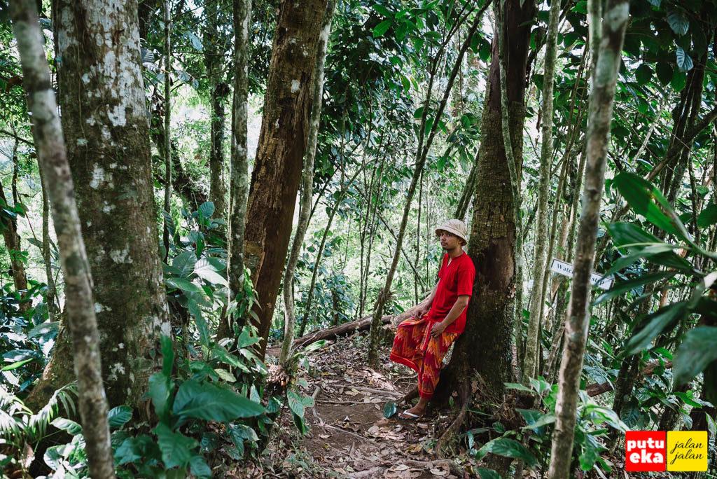 Jalan di antara pepohonan
