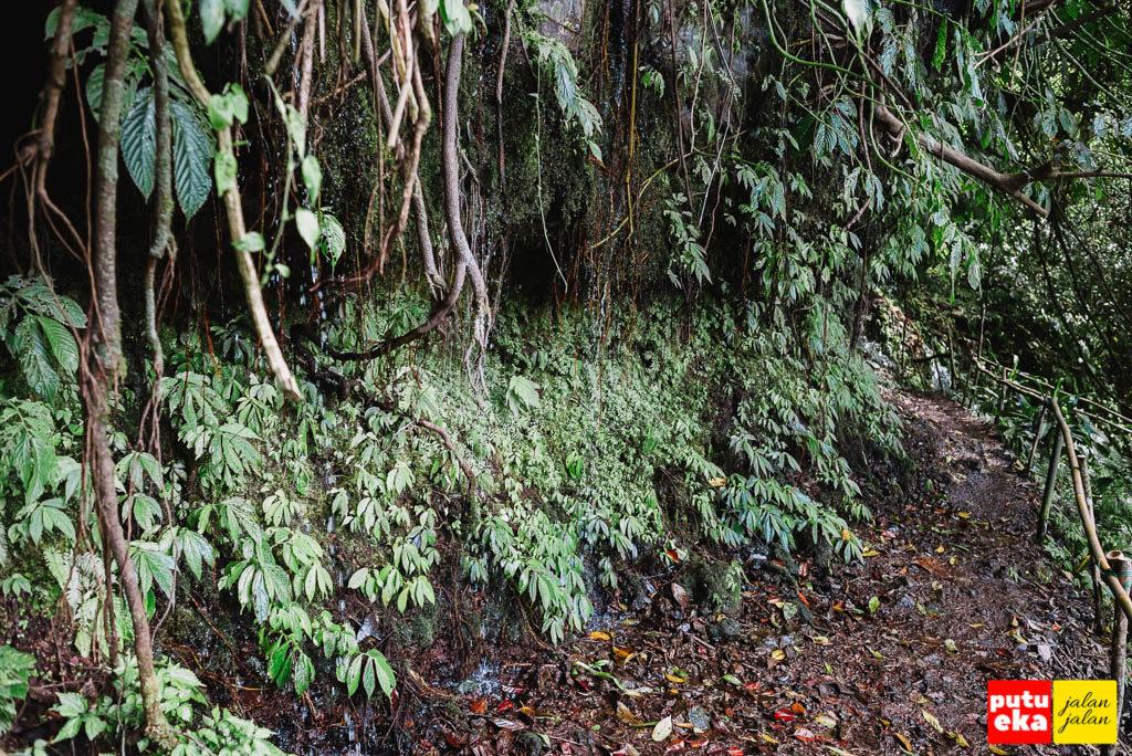 Jalan ke air terjun yang dibasahi kucuran air dari akar pohon