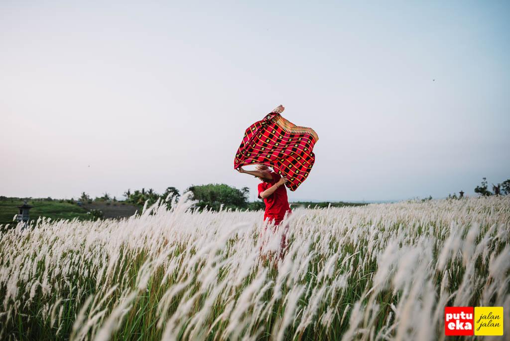Kibaran kain merah ditengah bunga Ilalang