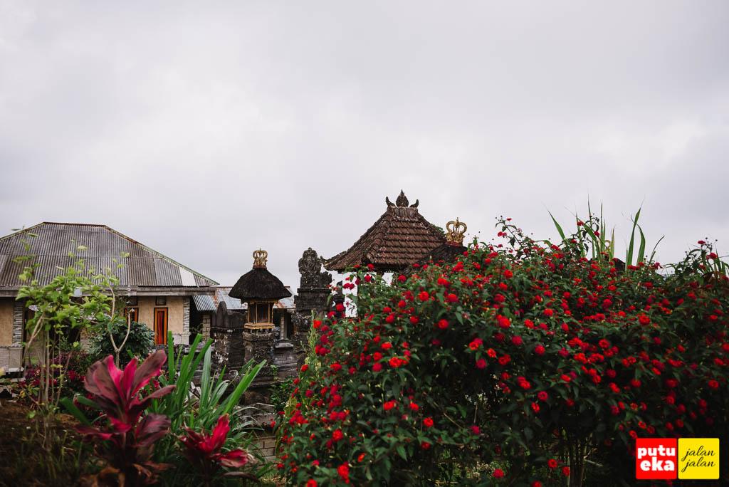 Pagar dari tanaman hidup di rumah-rumah penduduk