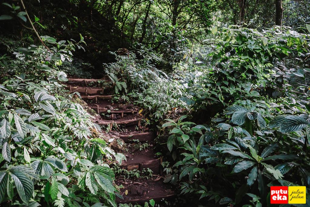 Undagan yang membelah tumbuhan hijau menuju air terjun